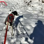 Nature Friday – Shadows on Snow