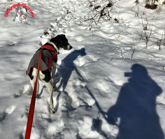 Nature Friday - Shadows on Snow