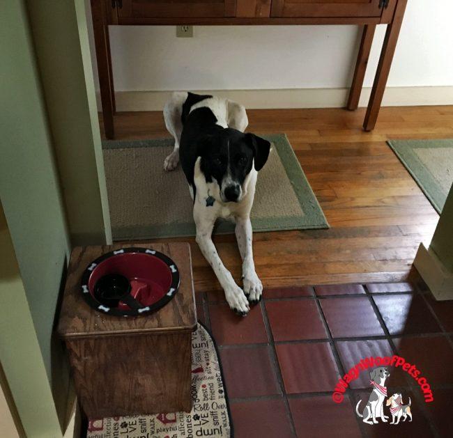 Luke - Dog Treat Quality Control