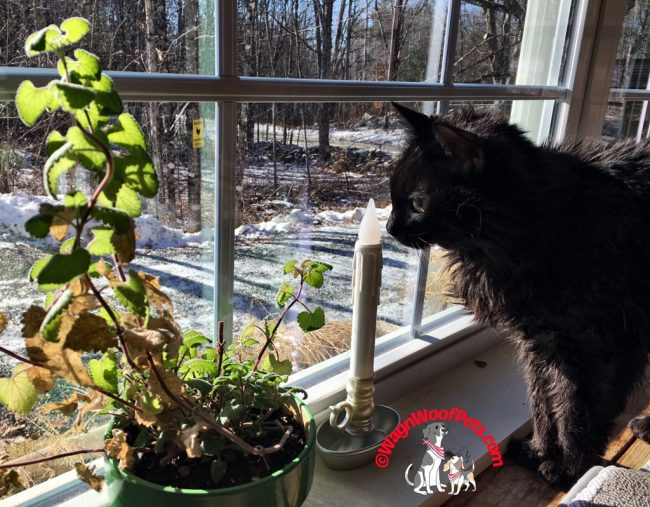 Samantha and Her Catnip Plant