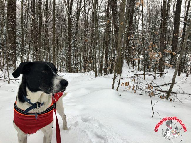 Luke on Our Farm Trails