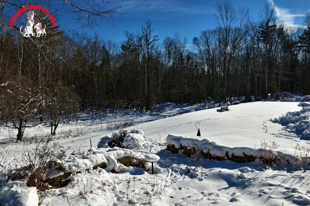 Deer Tracks on the Farm
