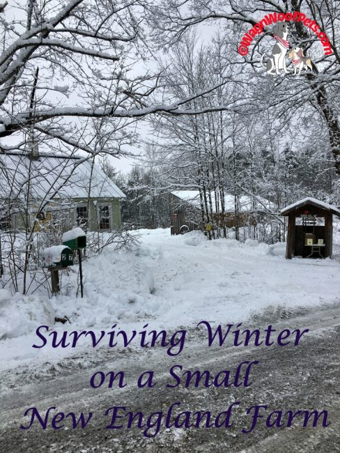 Surviving Winter on a Small New England Farm
