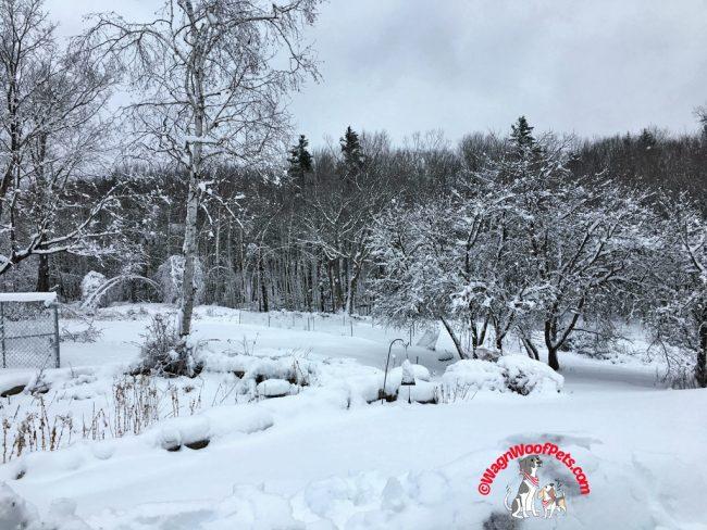 Winter's Return on the Farm