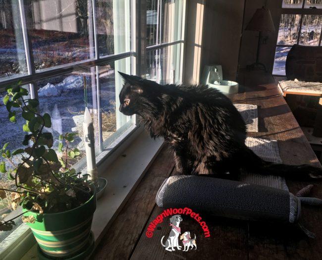 Kitty Samantha's Window View