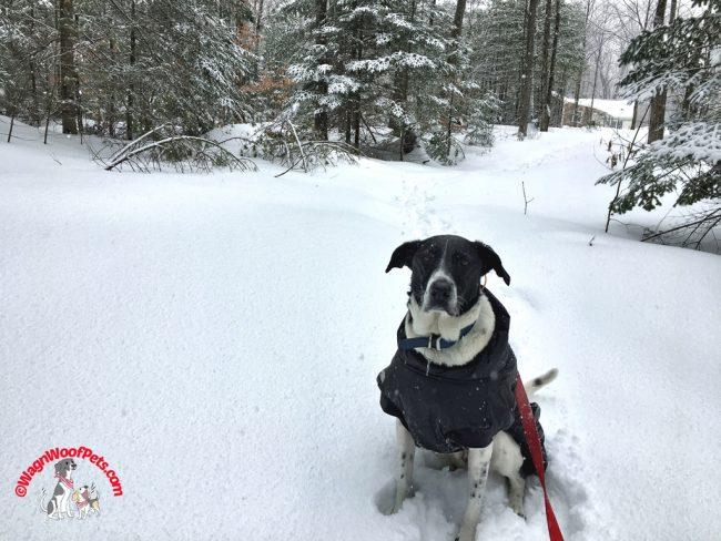 Walking in a Snowstorm