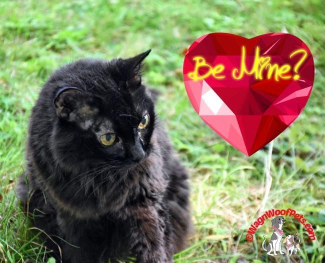 Happy Valentine's Day from Samantha