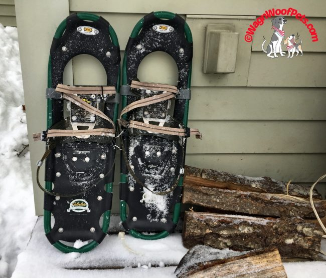 Snowshoes are Needed for Winter Walking in the Woods