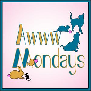 Awww Mondays