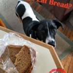 Can Dogs Eat Bread?