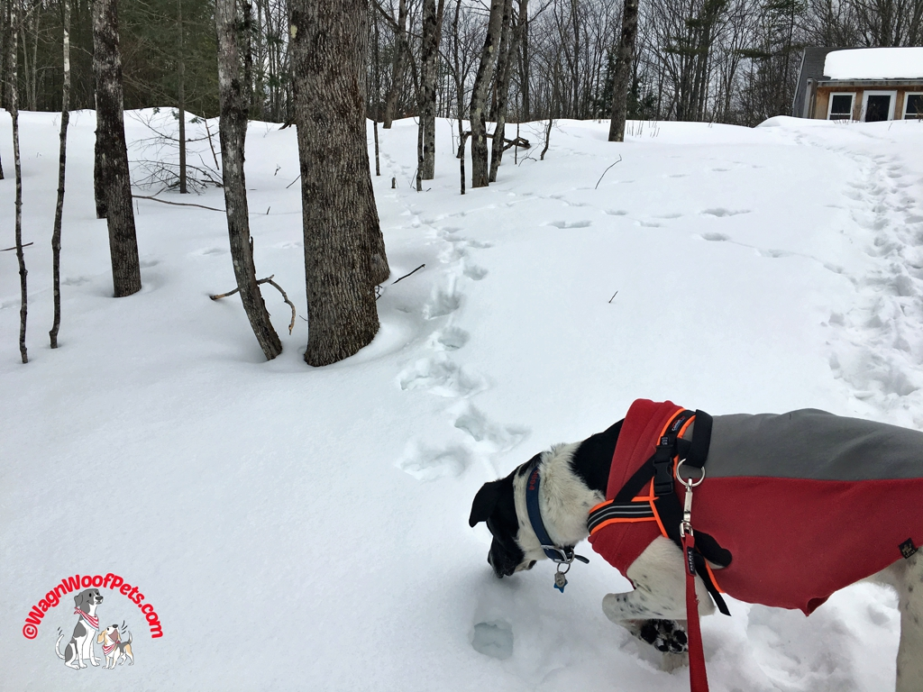 Sniffing Out the Wildlife Tracks