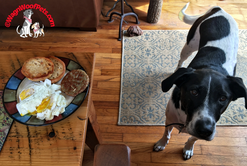 Fresh Eggs for Breakfast - Please Share with the Dog!
