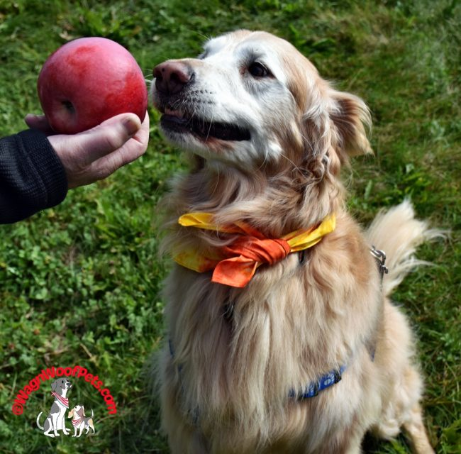 Dogs Love Apples