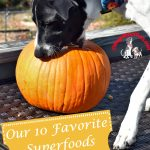 Our 10 Favorite Superfoods for Dogs