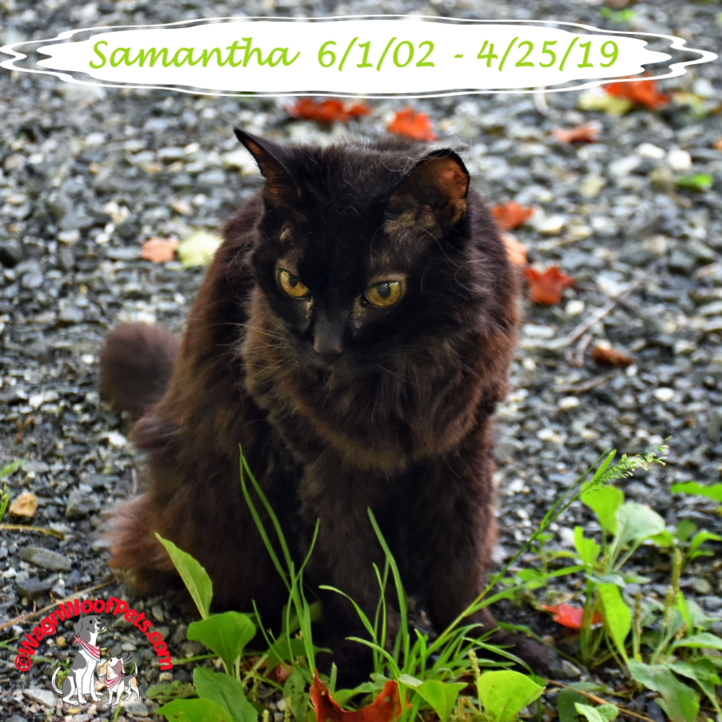 Goodbye to our Sweet Cat Samantha