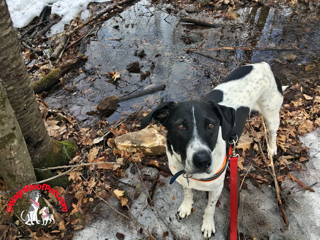 Snow Melt by Lab Mix Luke
