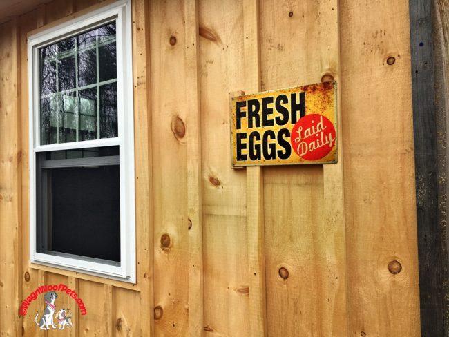 Fresh Eggs Laid Daily!