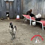A Surprise on the Farm