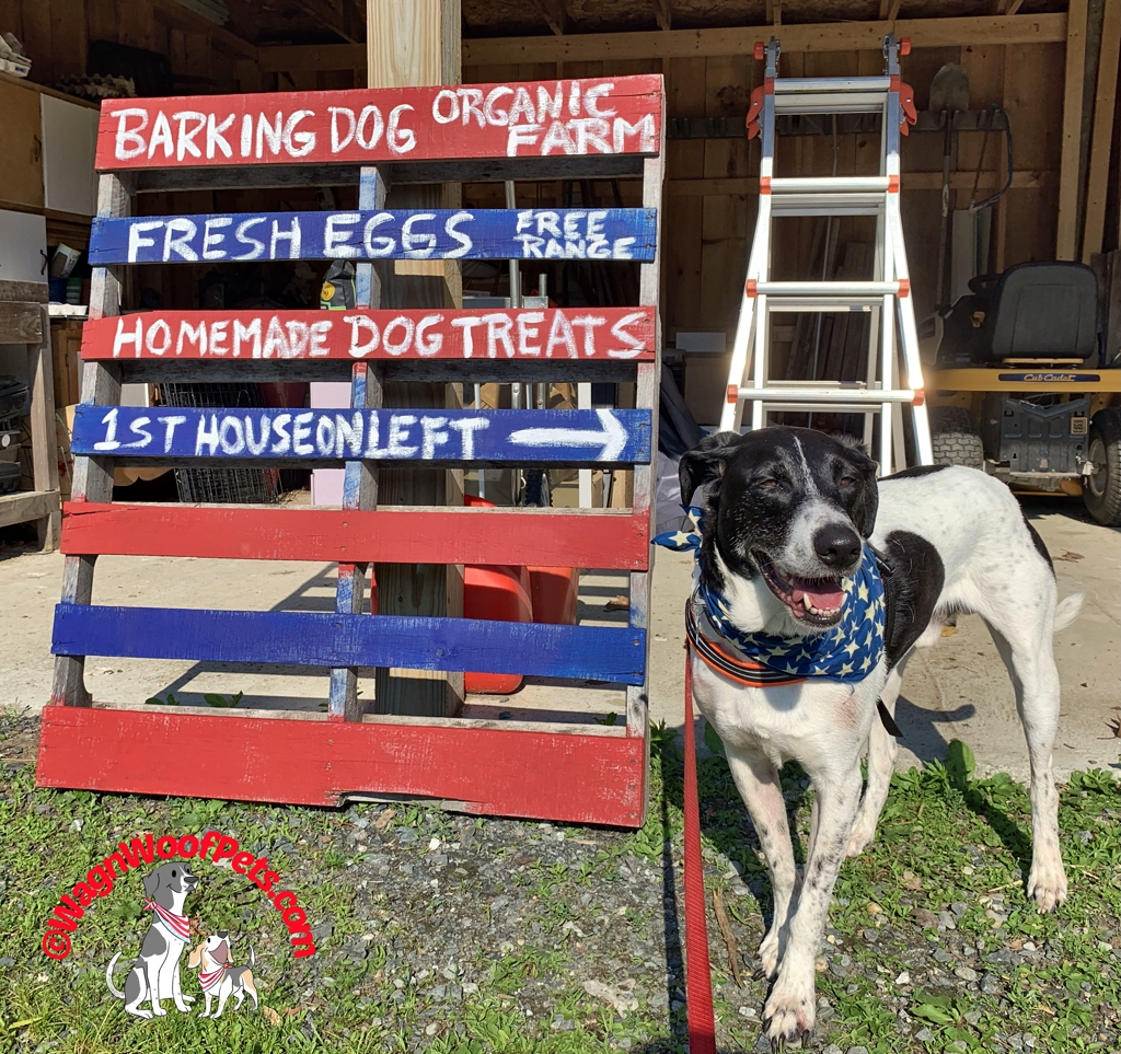 Lab Mix Luke and our Farm Sign