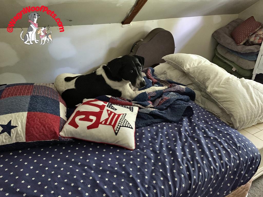 Luke's Own Bed