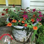 The Joy of Maintenance-Free and Multi-Purpose Gardens
