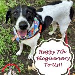 Reflections on 7 Years of Pet Blogging