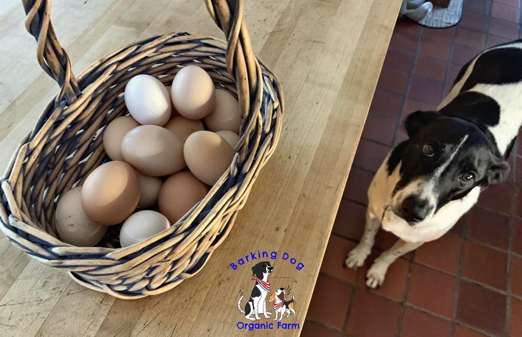 A Good Egg Day on the Farm!