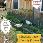 Chicken Coop Herb Garden – Benefits Dogs & Humans as Well!