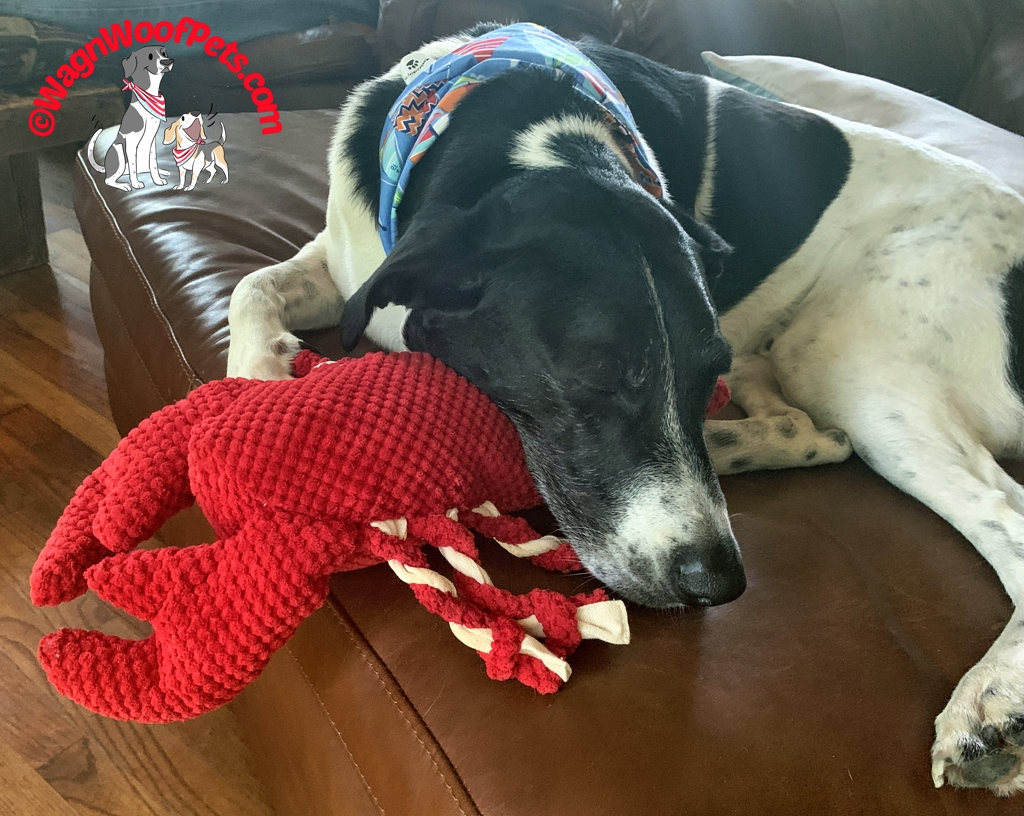 Luke Naps with his patchworkpet lobster