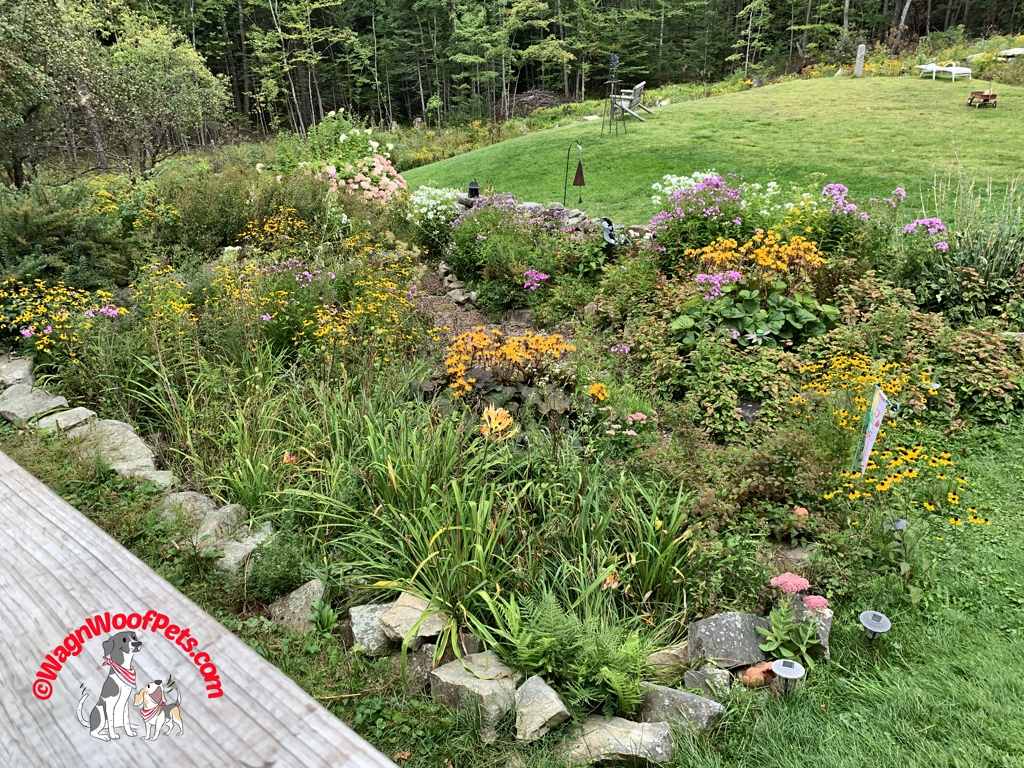 Early Autumn Garden