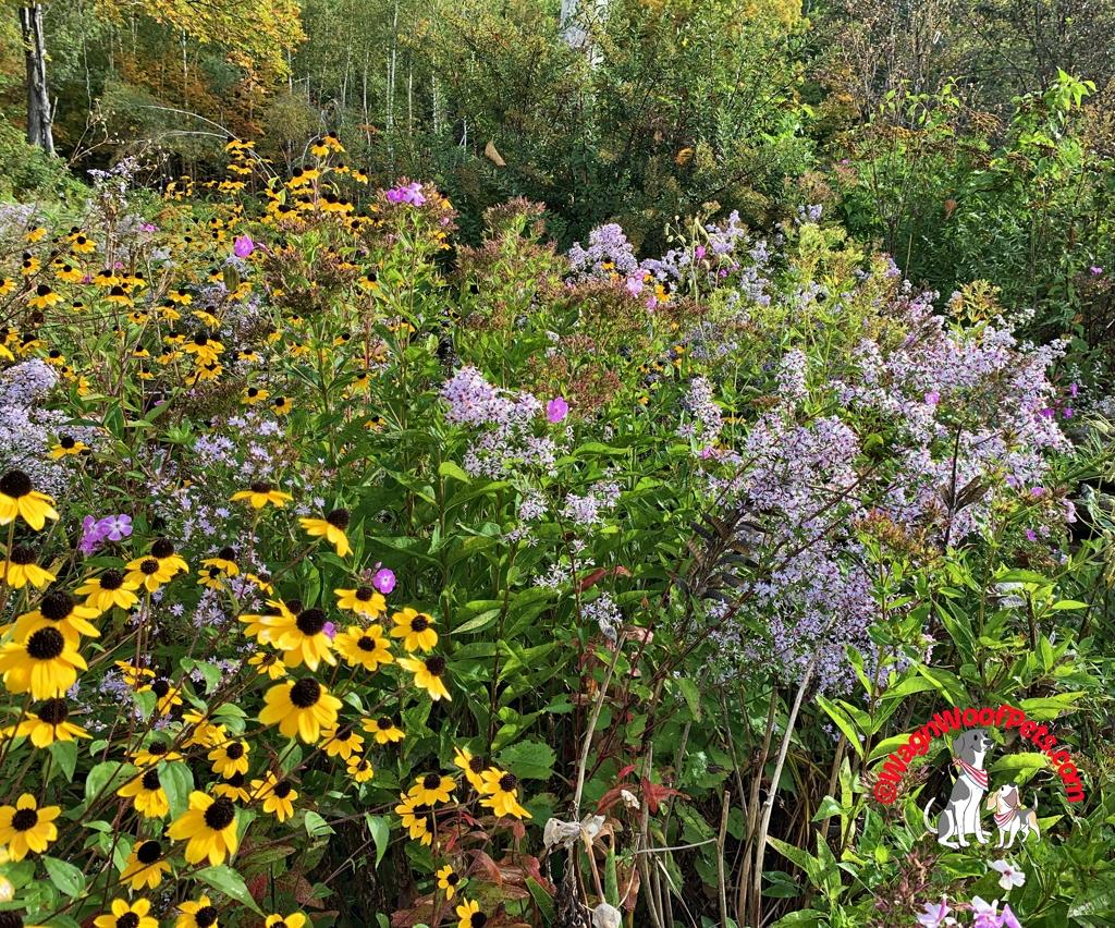 Autumn Color in the Garden