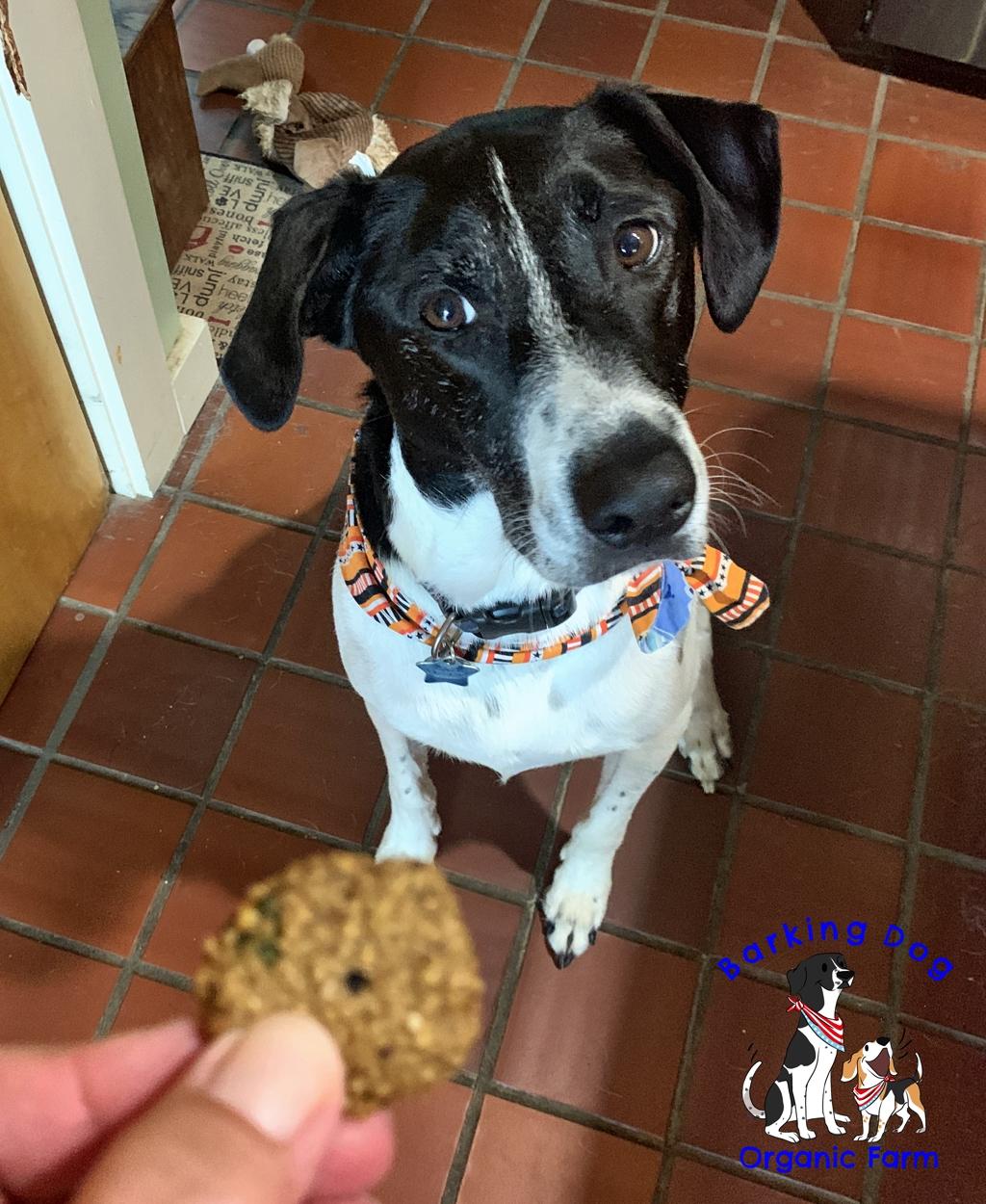 New Dog Cookie Recipe