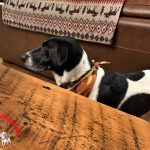 Farm to Table – A Recipe You Can Share with Your Dog