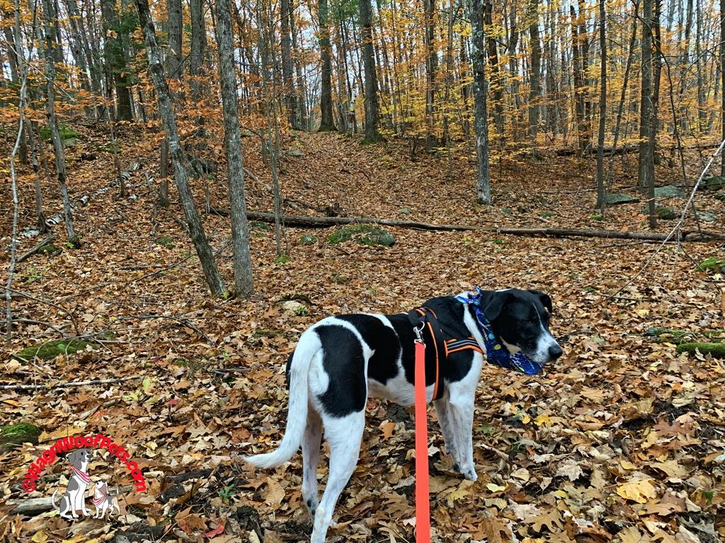Enjoying an Autumn Walk in the Woods