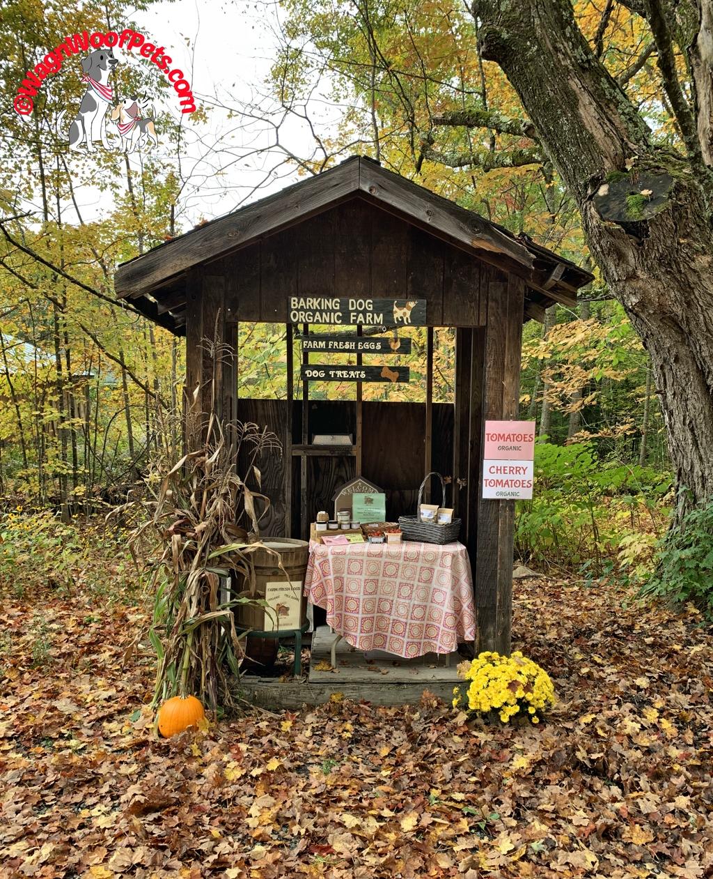 Our Autumn Farmstand