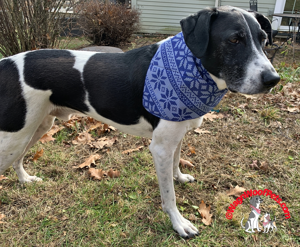 Canine Compassion Snowflake Dog Bandana