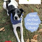 Canine Compassion Dog Bandanas – Now in Our Shop!