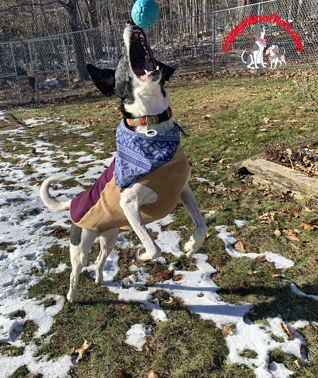 Stylish, Comfy, & Warm Dog Coat