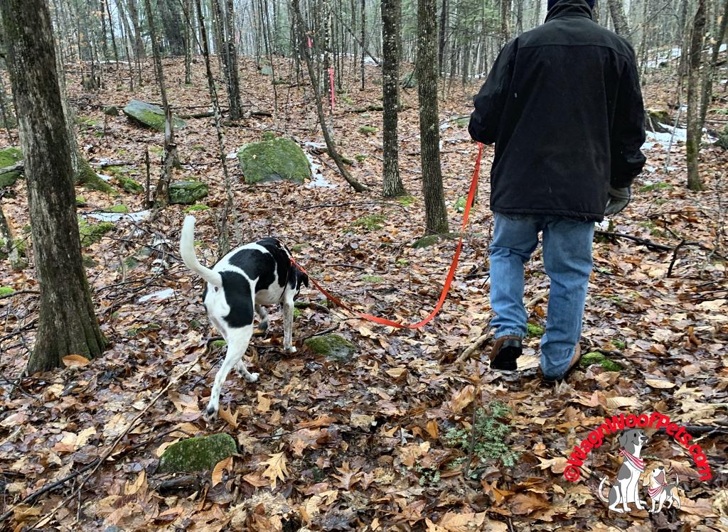 Dog Walk with Dad