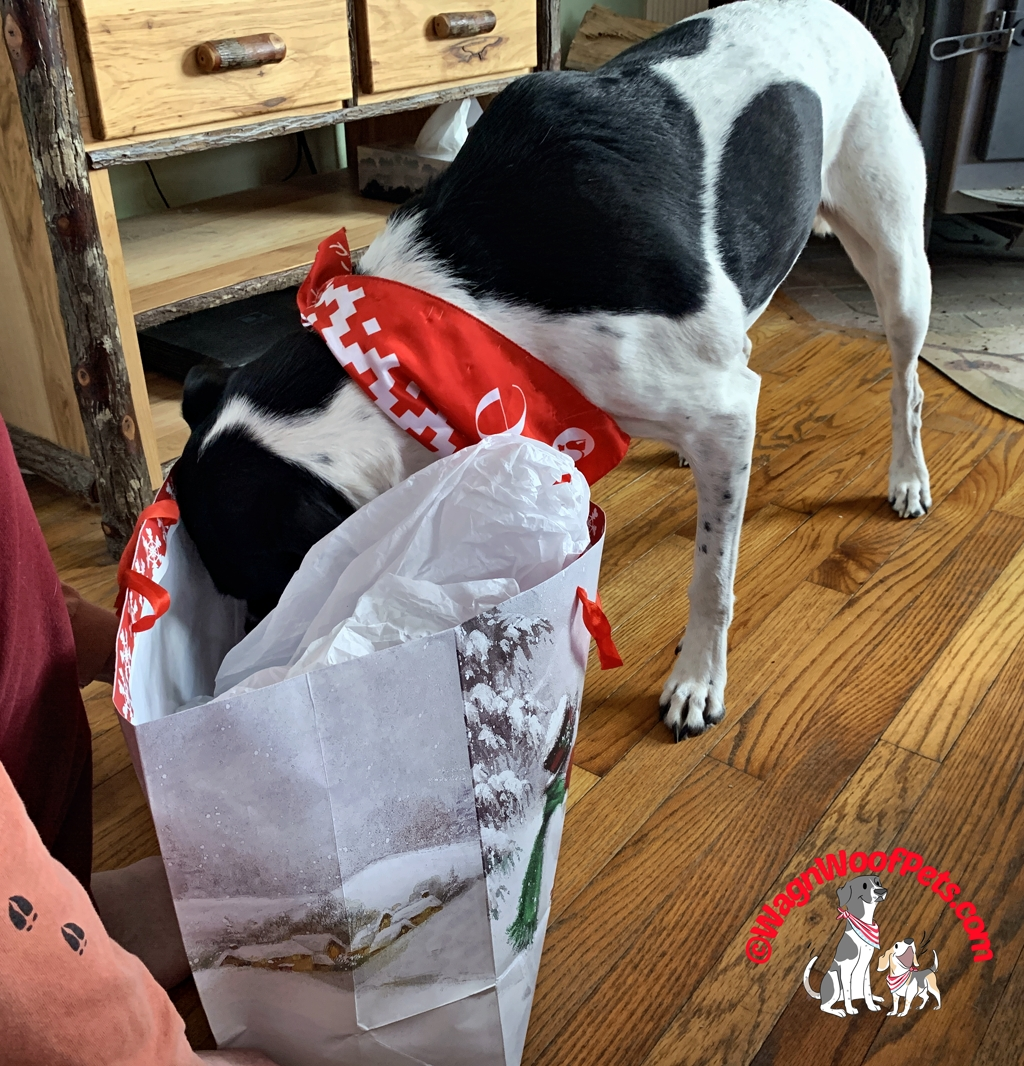Dog Opening Christmas Gifts