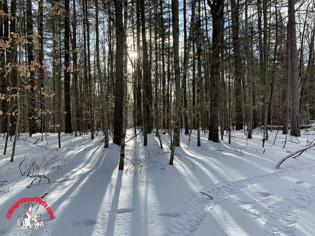 Winter Sunshine in the Woods
