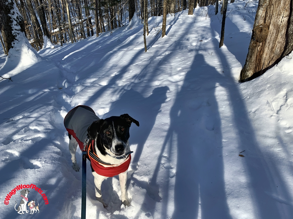 Dog and Shadows