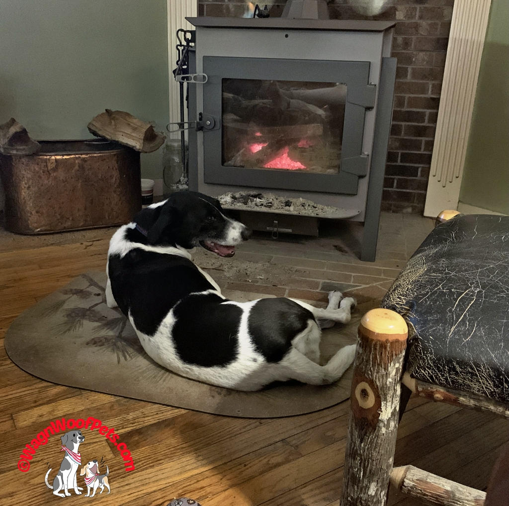Dog Panting in Front of Wood Stove