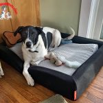 More Than Just a Dog Bed – Layla Pet Bed
