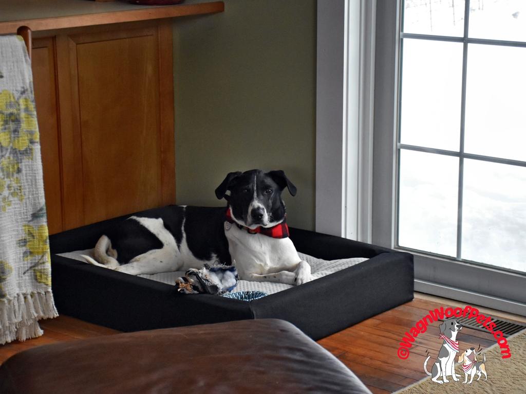 Dog Bed from Layla Sleep