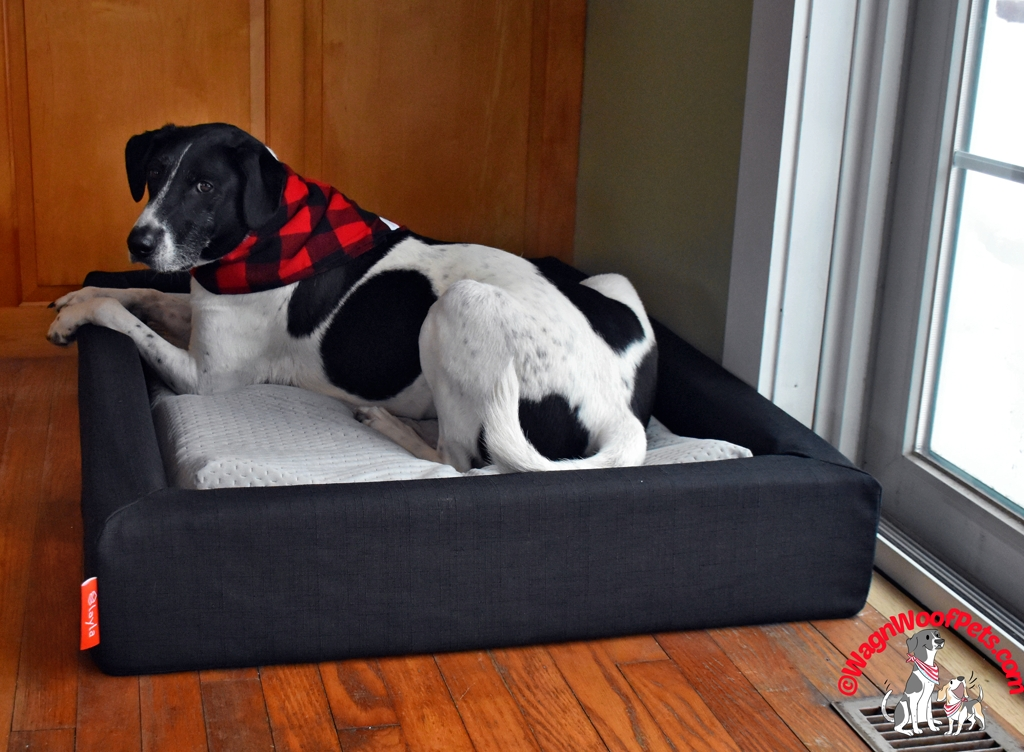 Pet Bed from Layla Sleep