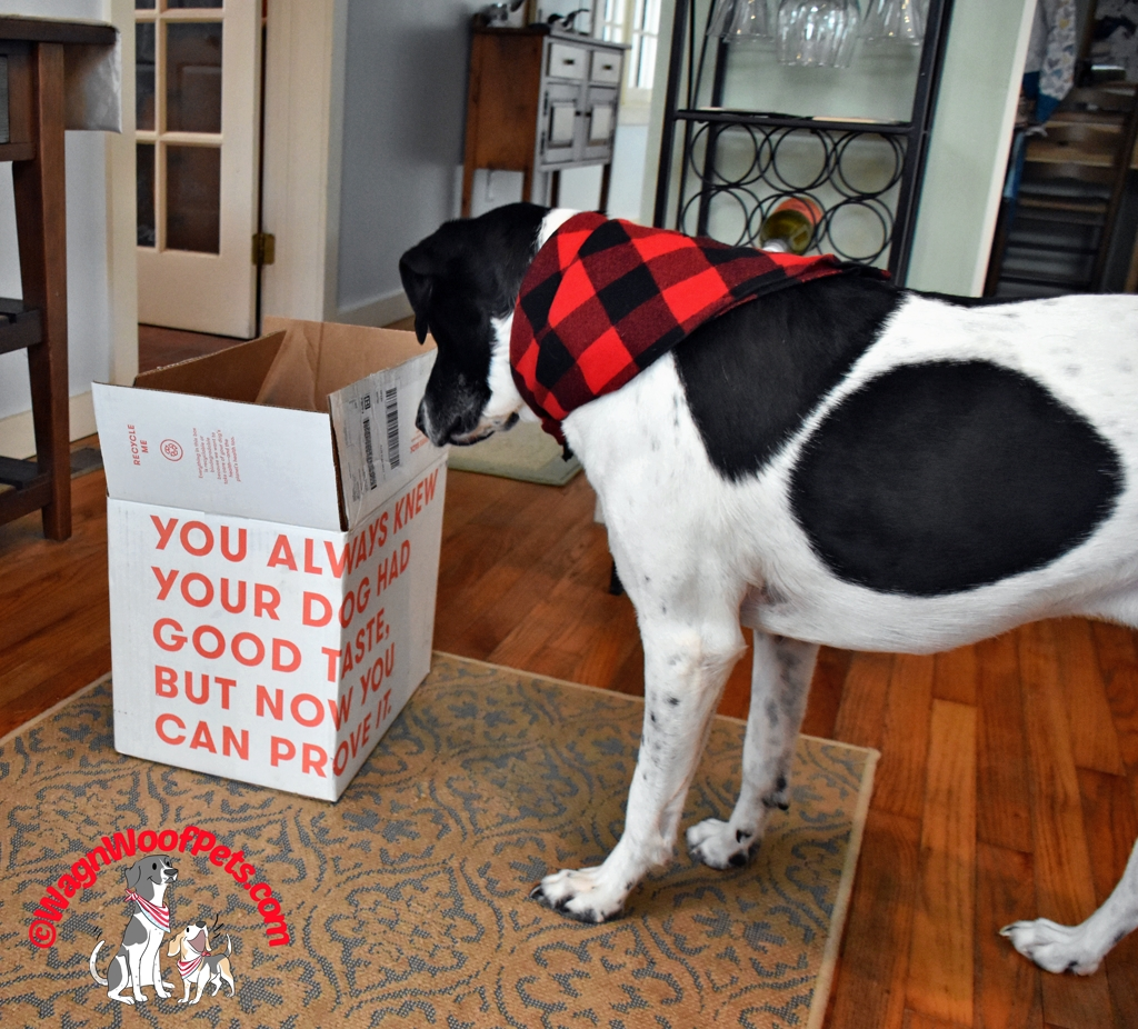 Fresh Dog Food from Ollie Delivered to Your Door