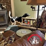 Find the Treat Game for Dogs