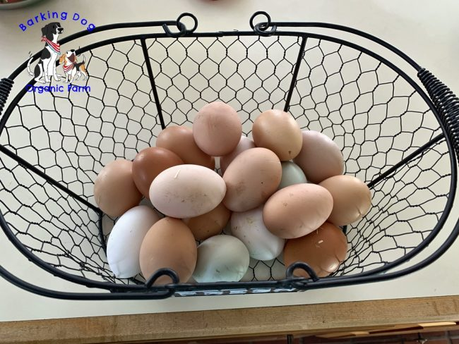 Egg Production is Up!