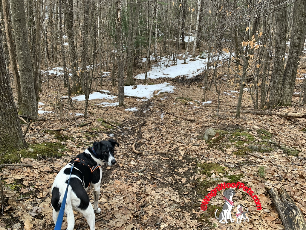 A Spring Dog Walk in the Woods